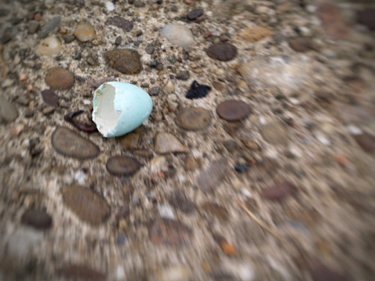 Broken Blue Egg